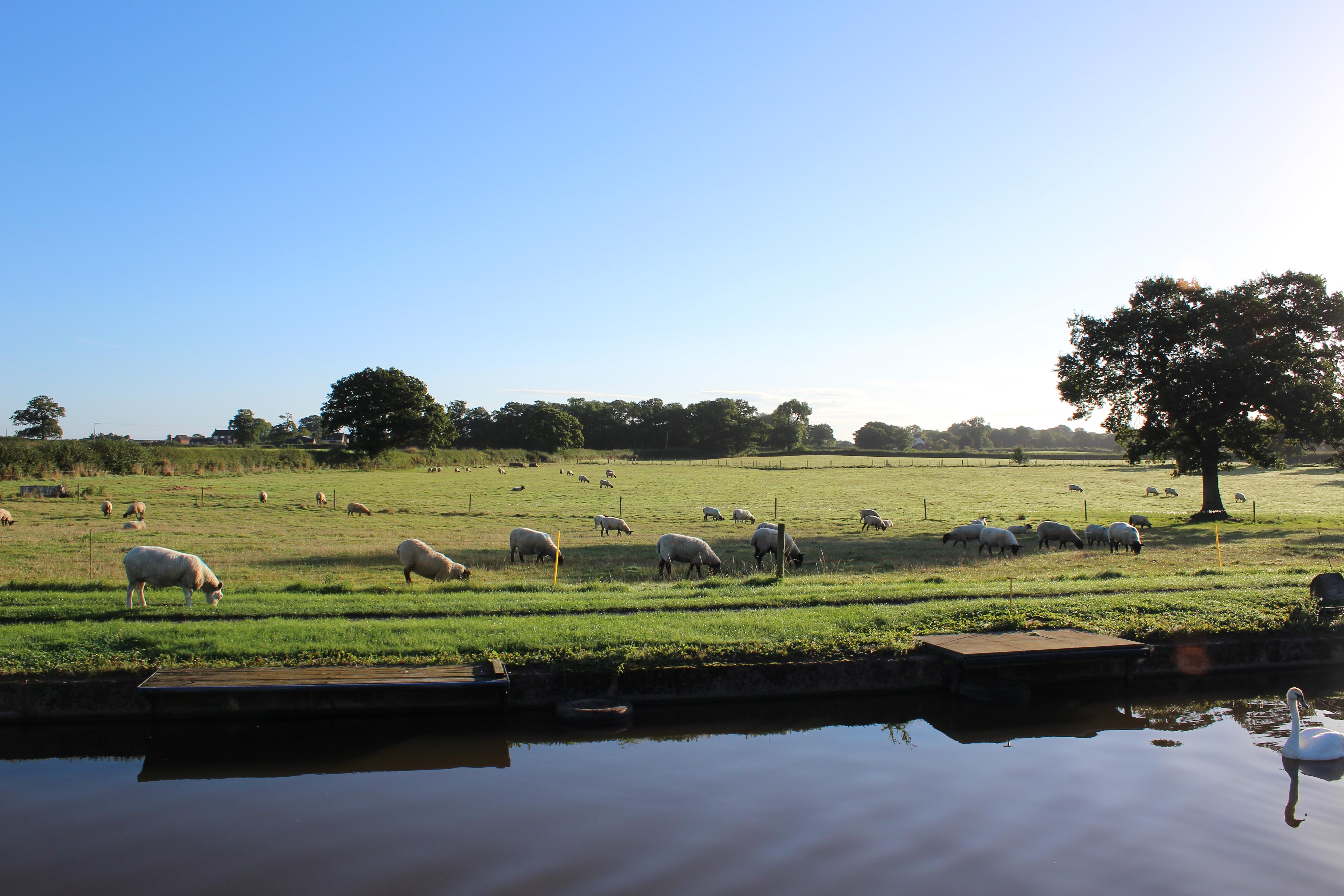 Green Pastures near Market Drayton